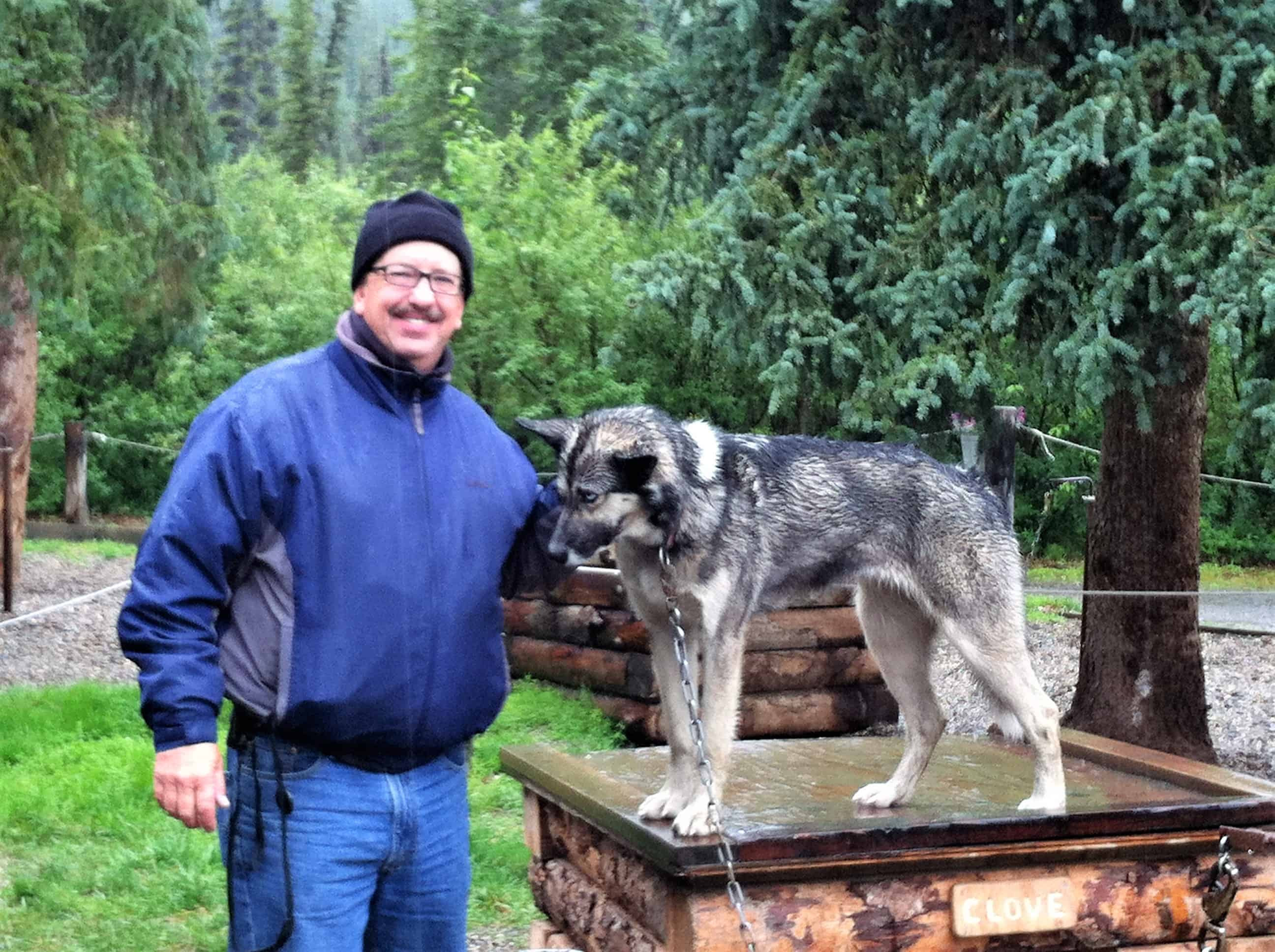 Sled Dog Clove in Denali Kennel