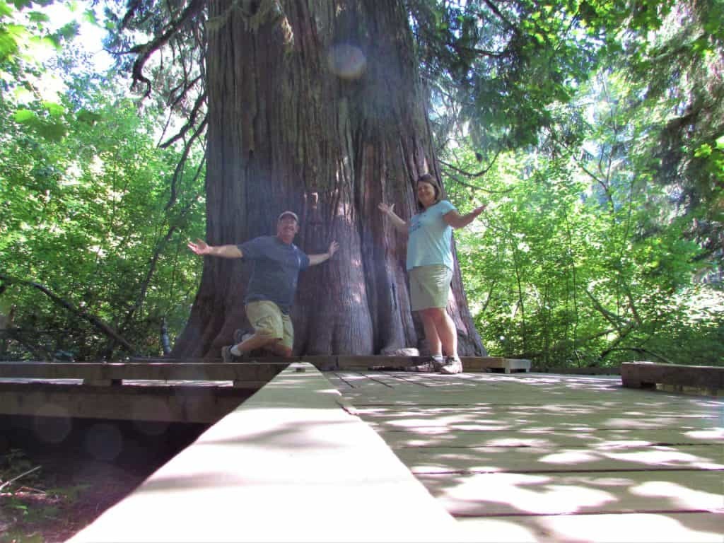 giant tree in the Grove of the Patriarchs in Mt Rainier National park