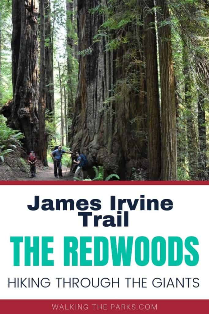 Hiking James Irvine Trail in The Redwoods National Park is quite the adventure. Read on to learn about this magical hike. #WalkingTheParks #Redwoods #HikeRedwoodsNationalPark
