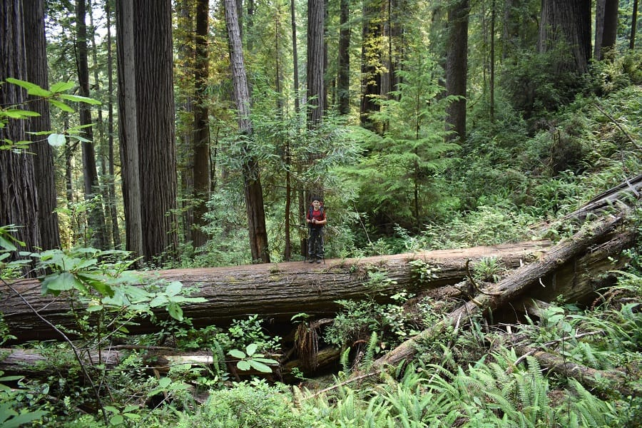 Boy standing on log in Fern Canyon