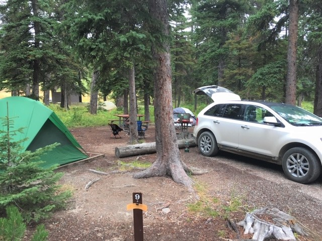 camp site under trees in cut bank campground glacier national park