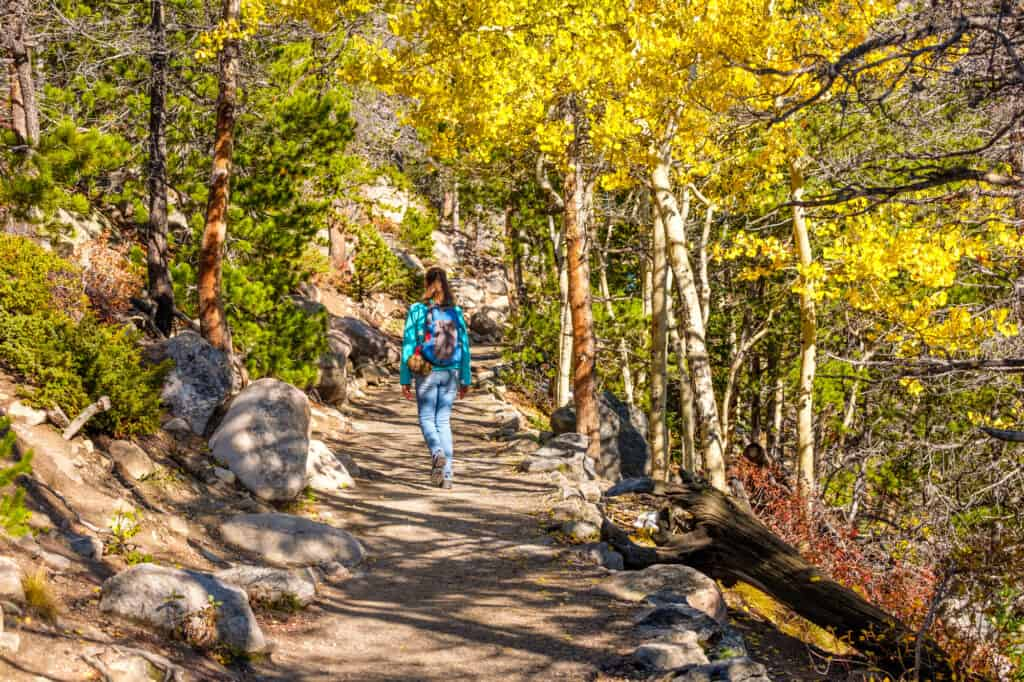 Woman hiking through aspen forest in fall at Rocky MOuntain National Park