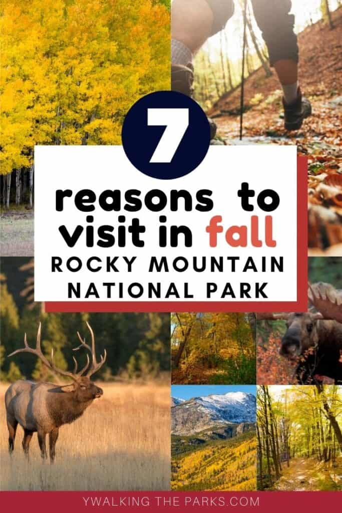 Here's our list of 7 things to do in Rocky Mountain National Park in the fall! #Walkingtheparks