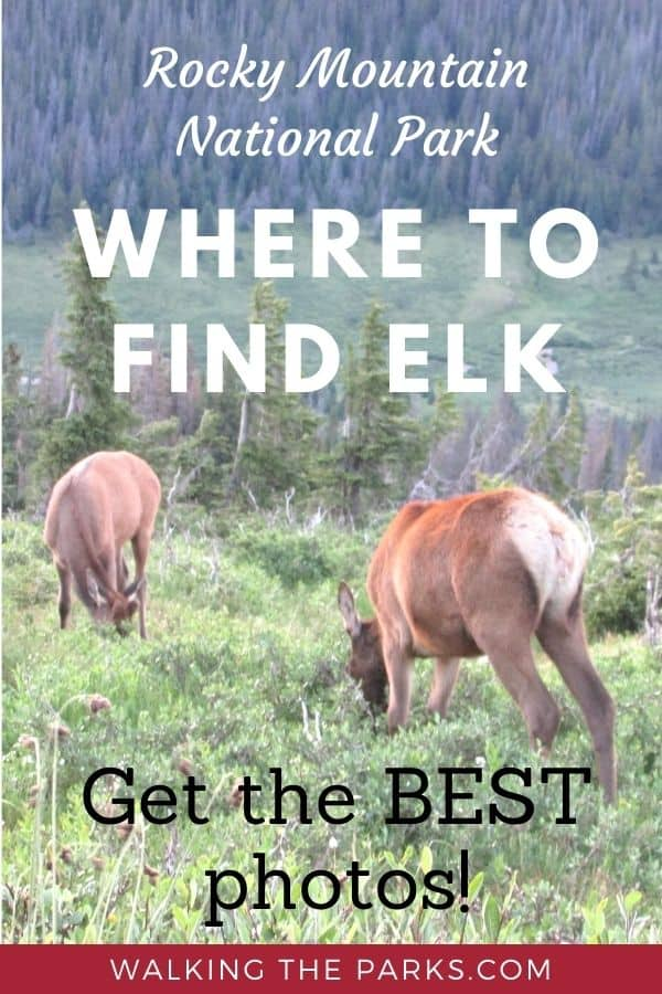 Where to find Elk in Rocky Mountain National Park.