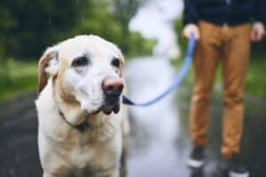 Man with Dog hiking in the rain